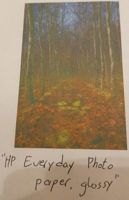 """HP Everyday Photo Paper, glossy"""