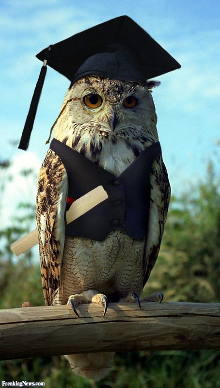 Wise-Owl-33640.jpg