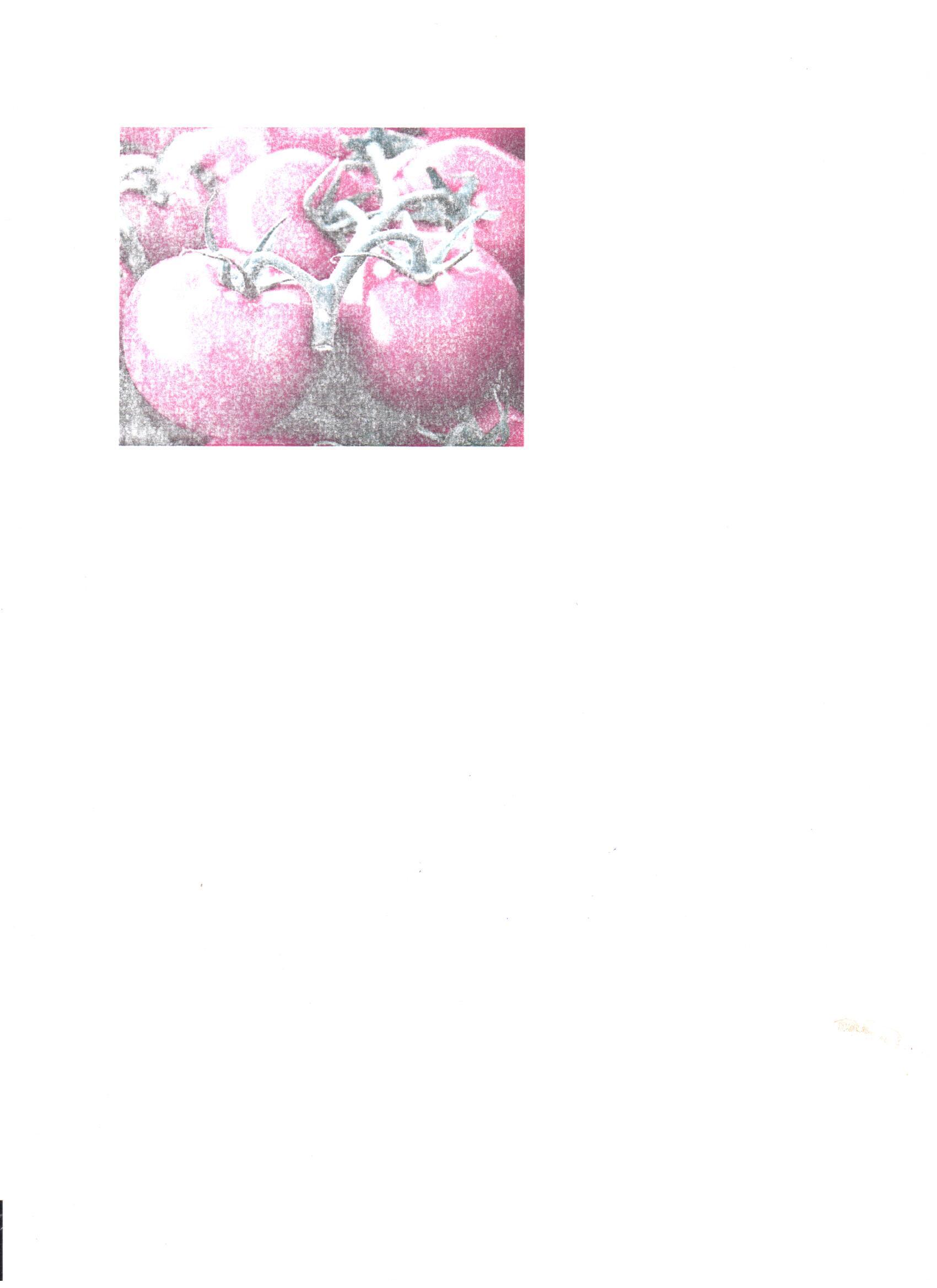 tomato-eba627c31923bfa327b8b4d366bf2c876fe1d6b0-s6-c30.jpg